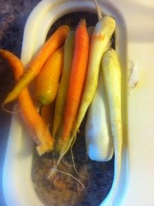 So many pretty carrots